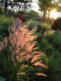 Hamlin Grass