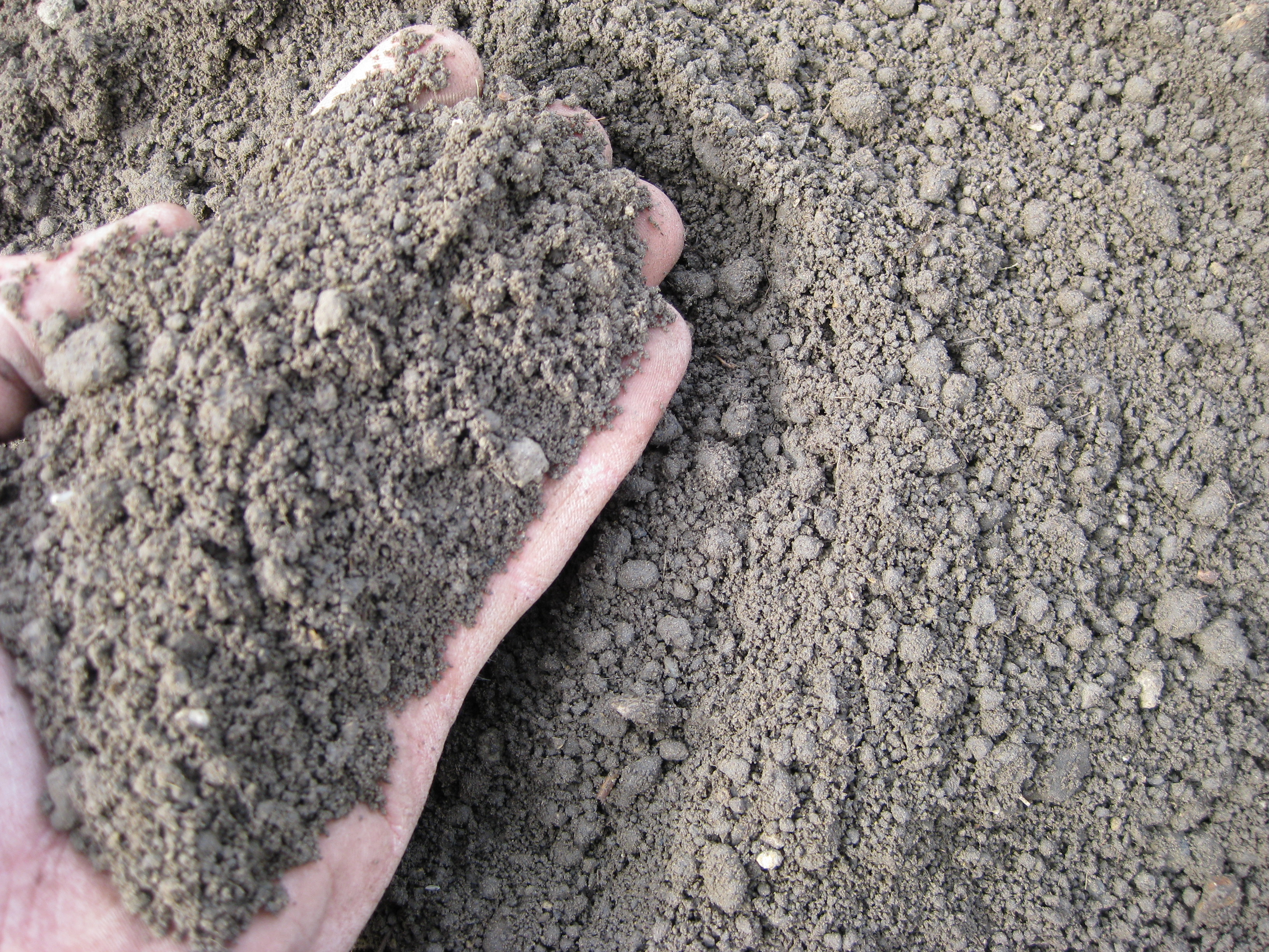 Topsoil closeup